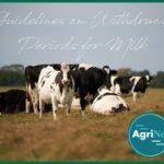 managing withdrawal periods cows