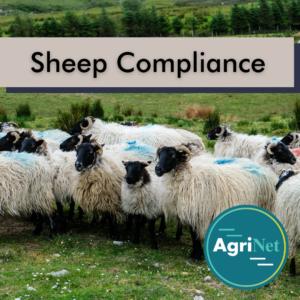 Sheep compliance