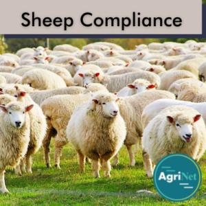 sheep compliance (3)